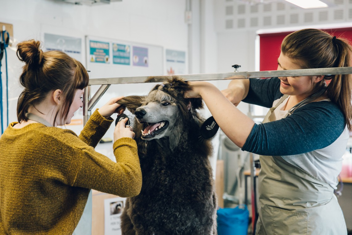 Animal Care Apprenticeship Overviews